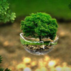 3 petits gestes bons pour l'environnement et pour votre porte-monnaie